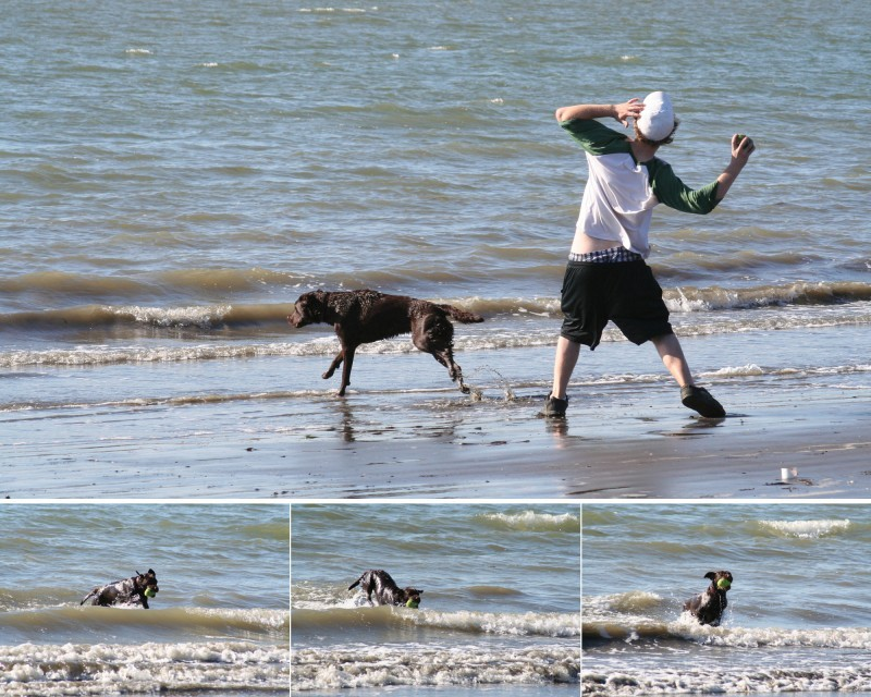 Tasha plays in the bay
