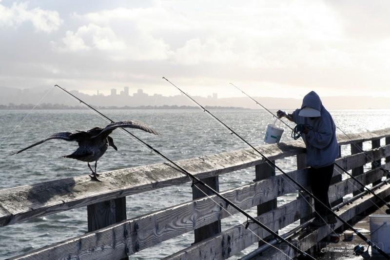 Fisherwoman on Berkeley Pier
