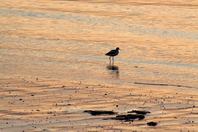 Bird in the Bay near Eastshore Park