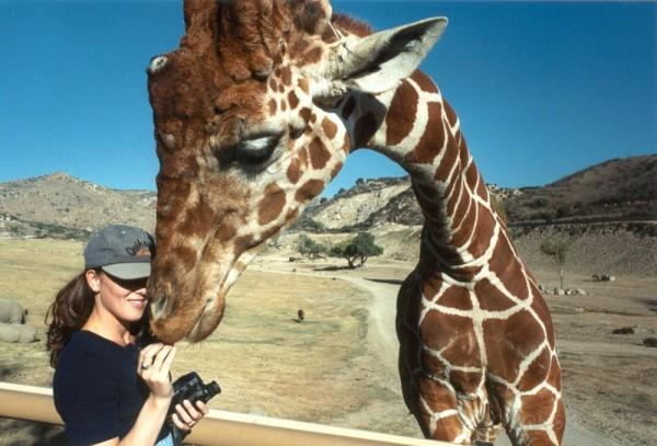 Giraffe at the Wild Animal Park