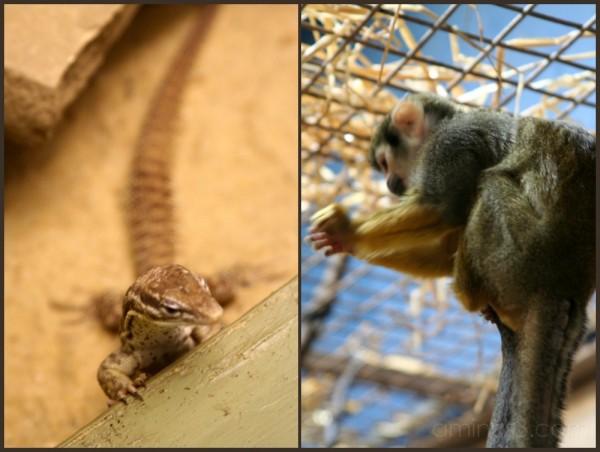 Lizard and Monkey at Edinburgh Zoo