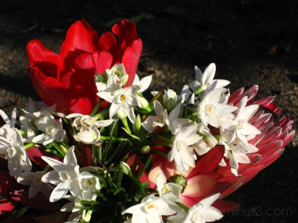 The (in)famous kitchen floral arrangement