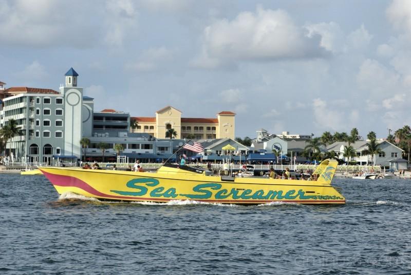 sea screamer speedboat florida gulf mexico dolphin
