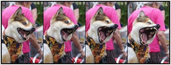 The Big Yawn!