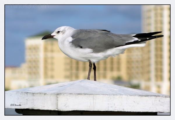 Gull in the Wind