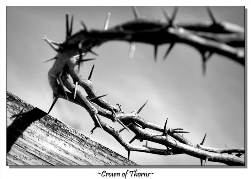 Sacrifice †