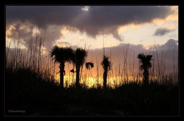 Katie's Sunset