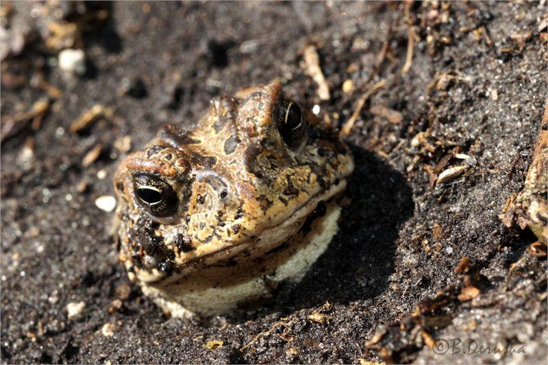 I Toad You, I'm a Prince!