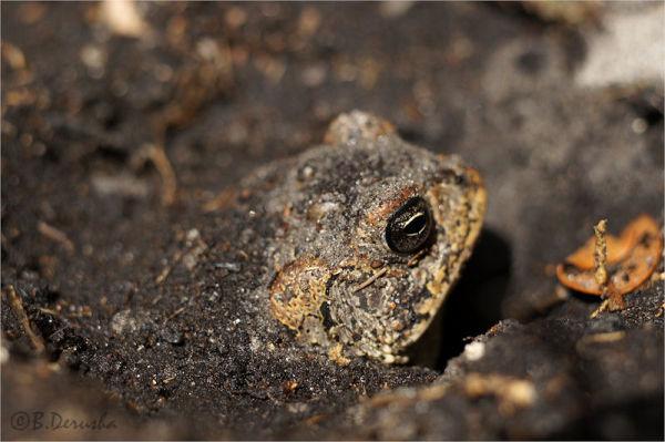 Profiling a Toad