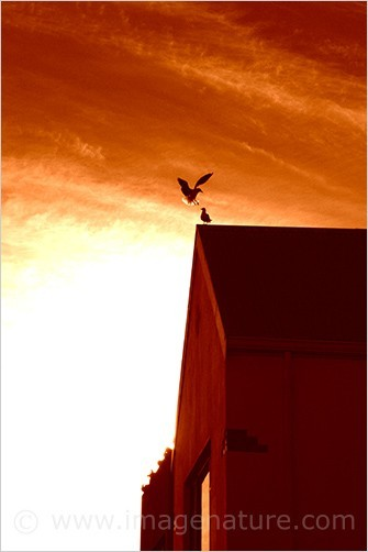 Two birds (seagulls)