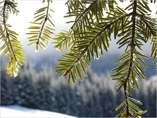 Swiss Jura winter scene