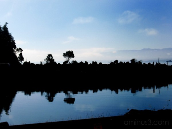 ocean reflection tree