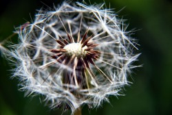 plant, flower, winter, fleur,