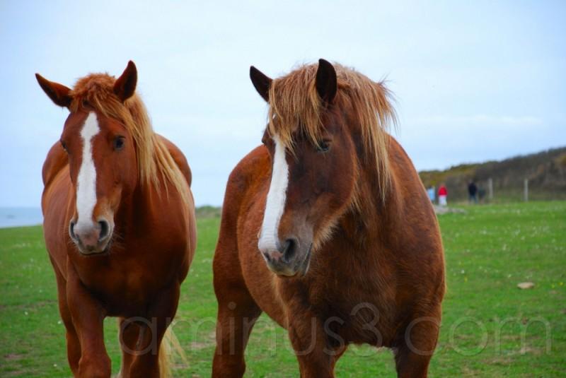 animal, cheval, campagne, france