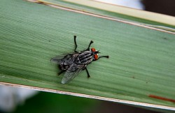 insect, animal, mouche
