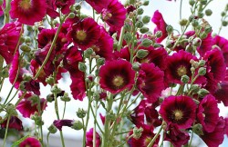 Fleur, plante, flowers, plant, nature, winter, sum