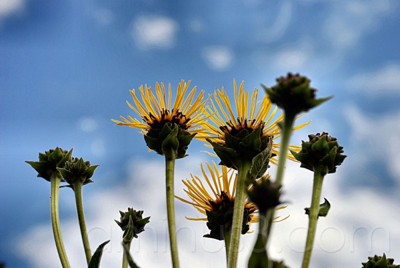 Fleur, plante, flowers, plant, nature, winter