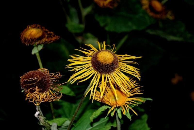 Fleur, plante,n&b, flowers, plant, nature, winter,
