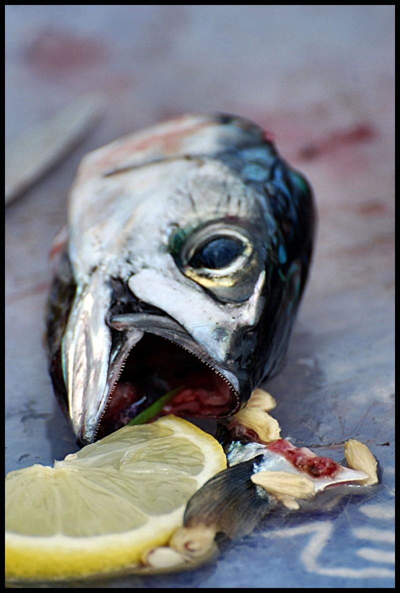poisson, mer