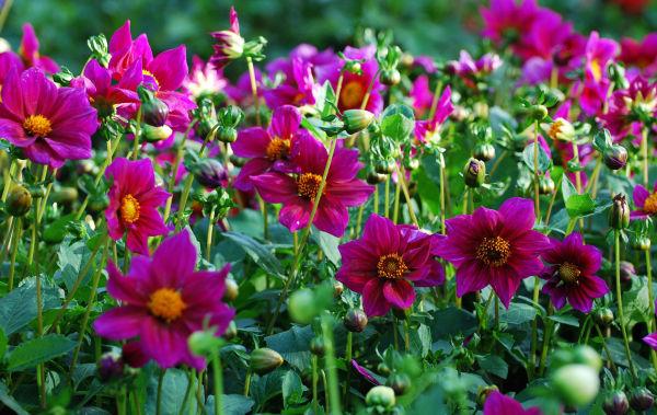 Fleur, plante, nature