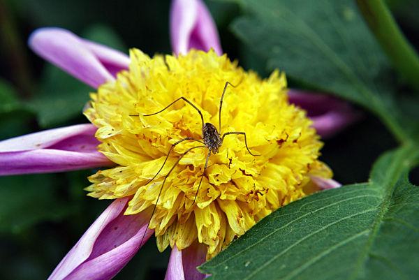insecte, fleur, nature