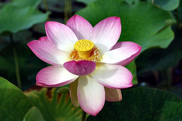 Fleur, plante, nature,