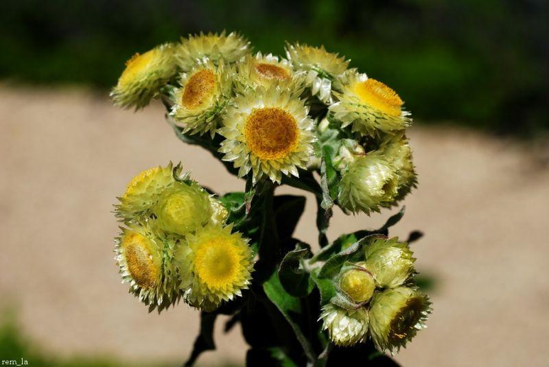Fleurs,Vincennes,Macro,Nature