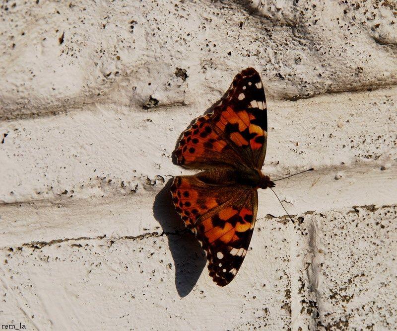 papillon,nature,mur