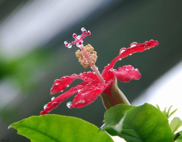 fleur,plante,brest