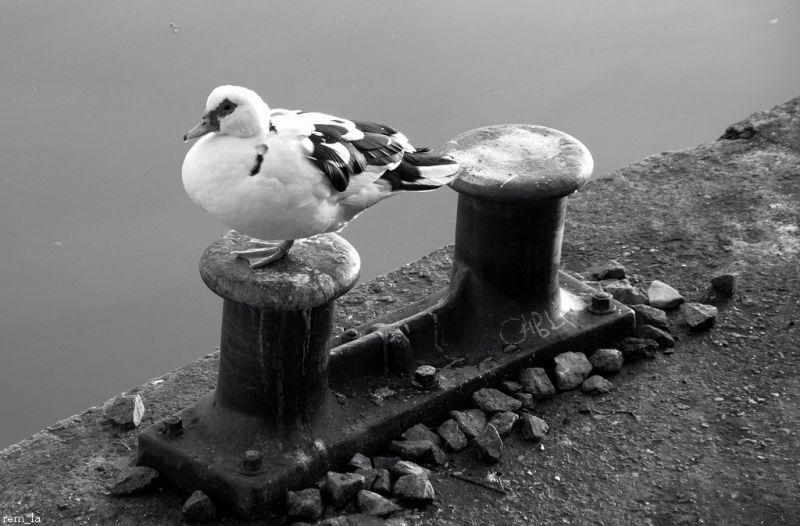 port,bonneuil,oiseau