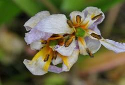 giverny,fleur,printemps