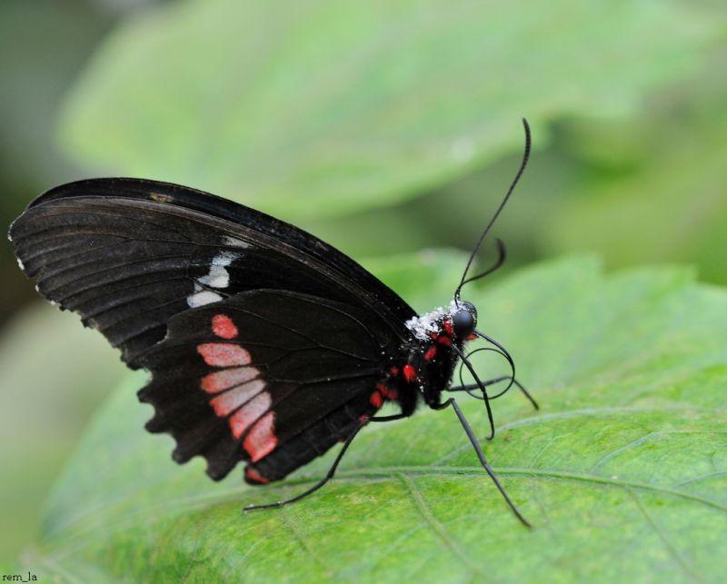 papillon,insecte,poullain
