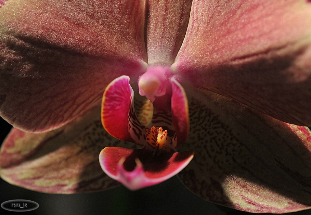 orchidée,fleur,paris,napoléon