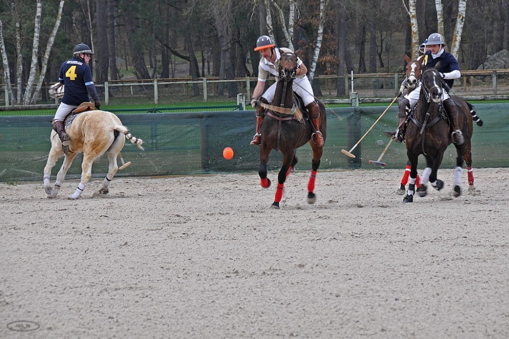 polo,cheval,fontainebleau