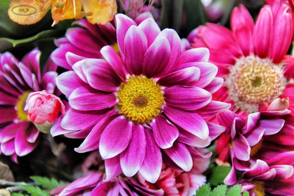 fleur,printemps