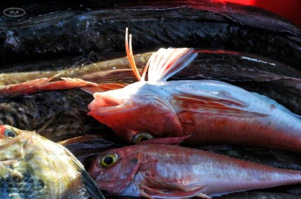 Retour de pêche au Conquet en novembre 6