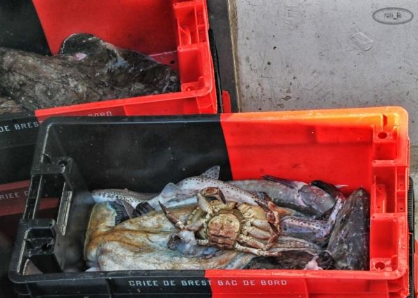 Retour de pêche au Conquet en novembre 7