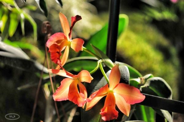 Orchidée à la Fondation Eugene Napoléon 10