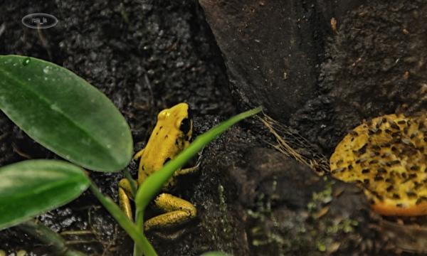 Biotropica, Serre zoologique à Val de Rueil 2