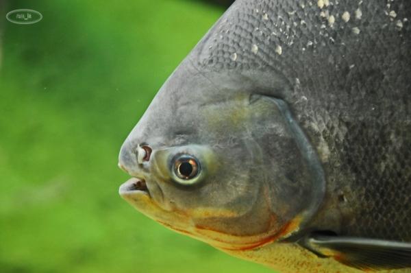 Biotropica, Serre zoologique à Val de Rueil 12