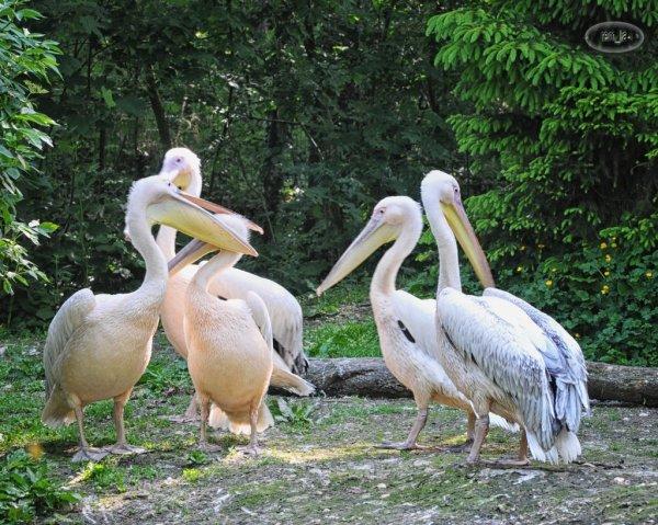 cerza,zoo,animal,oiseau