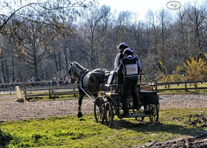 cheval,concours,attelage,marolles