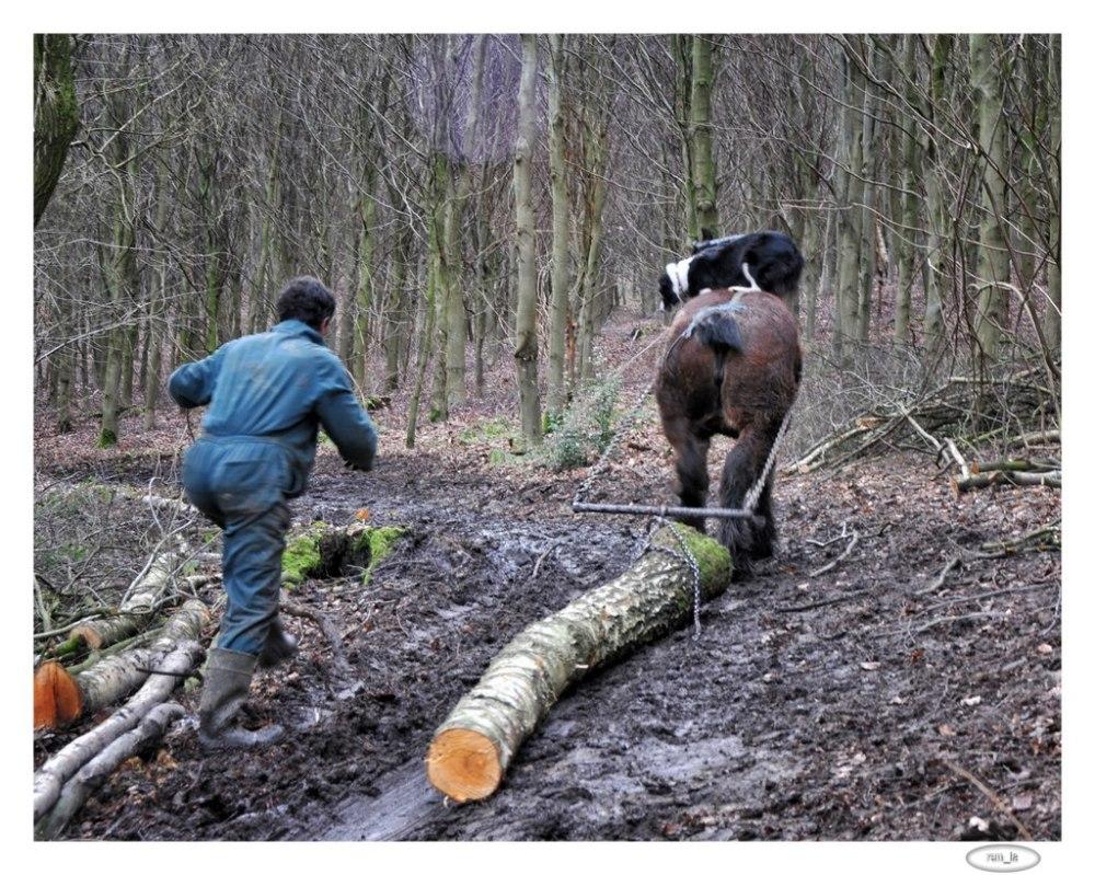 debardage,cheval,bois,belgique