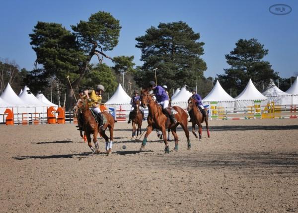 Paddock Polo à Fontainebleau