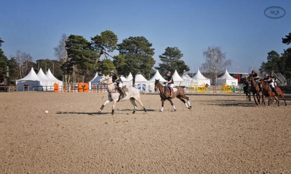 Paddock Polo à Fontainebleau   3
