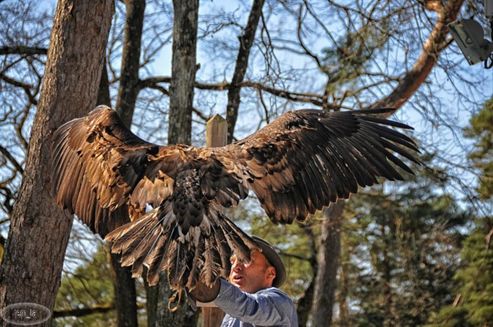 aigle,oiseau