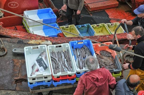 Retour de pêche au Guilvinec 5