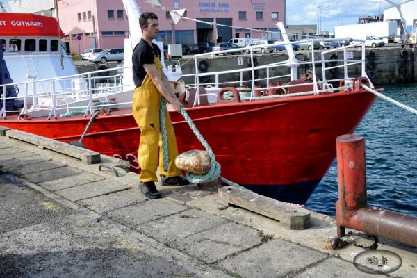 Retour de pêche à Douarnenez 5