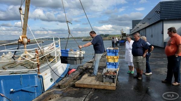 Retour de pêche à Douarnenez 7