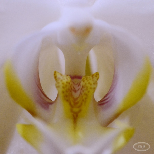 les Orchidées de l'abbaye du Moncel